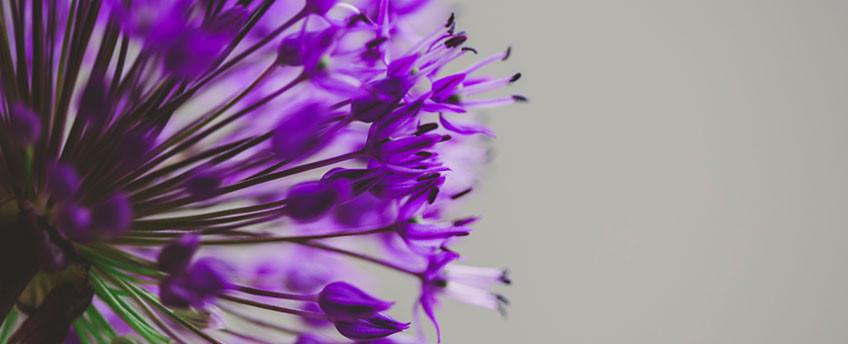 frische schnittblumen | blumen müller in krefeld-bockum, Garten und Bauten