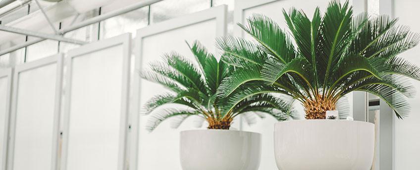 Zimmerpflanzen blumen m ller in krefeld bockum for Pflanzen zimmerpflanzen