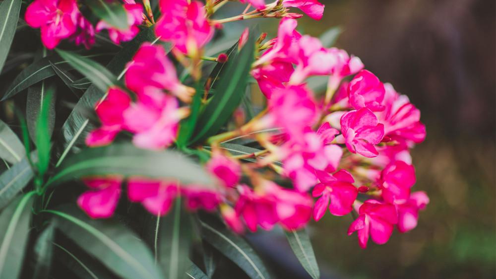 Beet und balkonpflanzen blumen m ller in krefeld bockum for Beet und balkonpflanzen